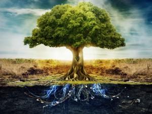 tree3-300x225
